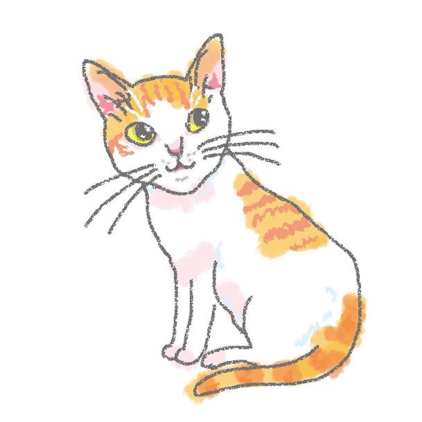 入居猫 アサヒイメージ