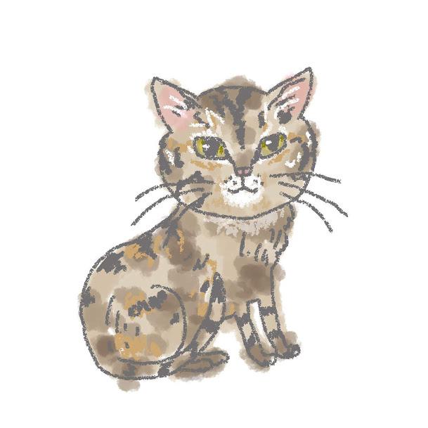 入居猫 ウメイメージ