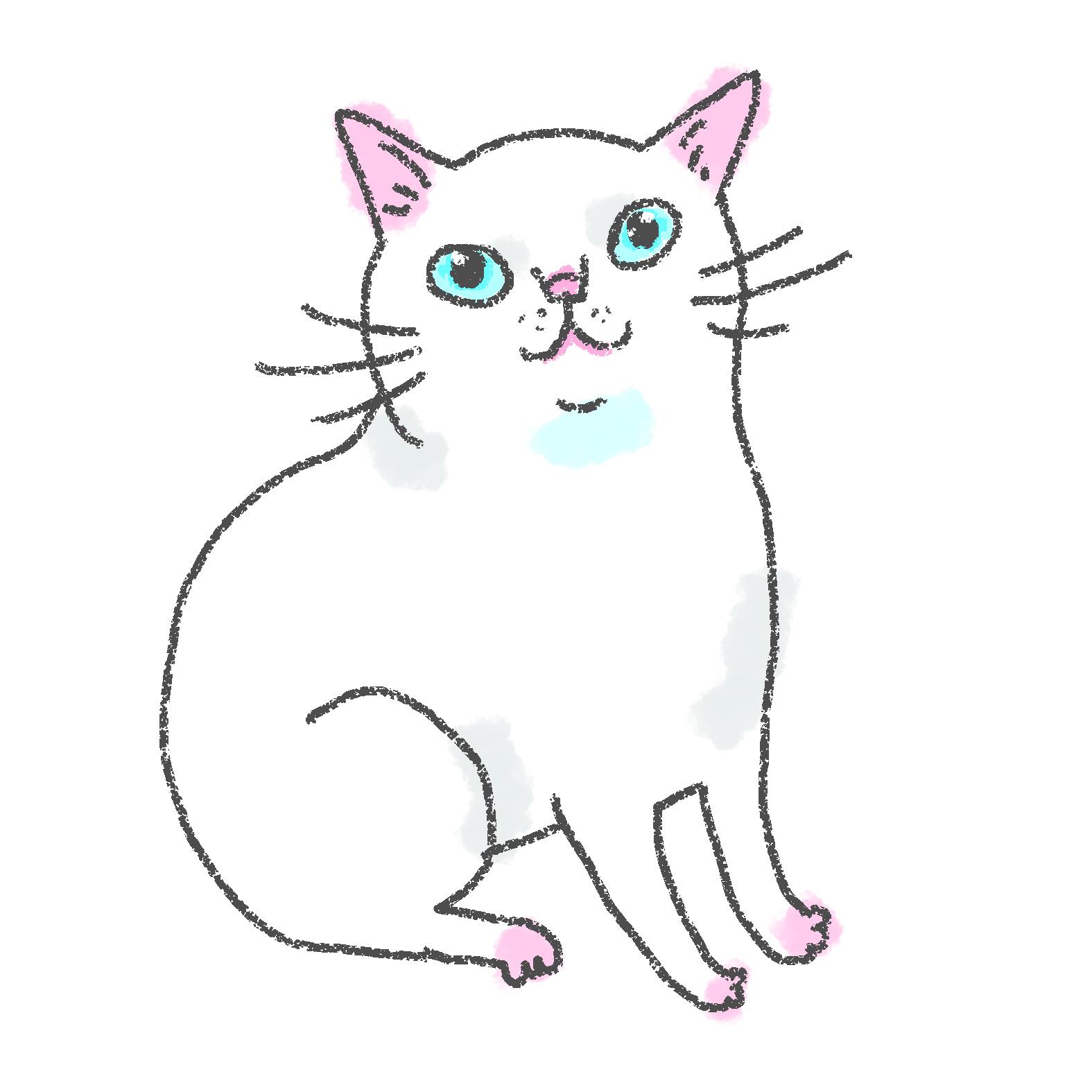入居猫 コニャイメージ