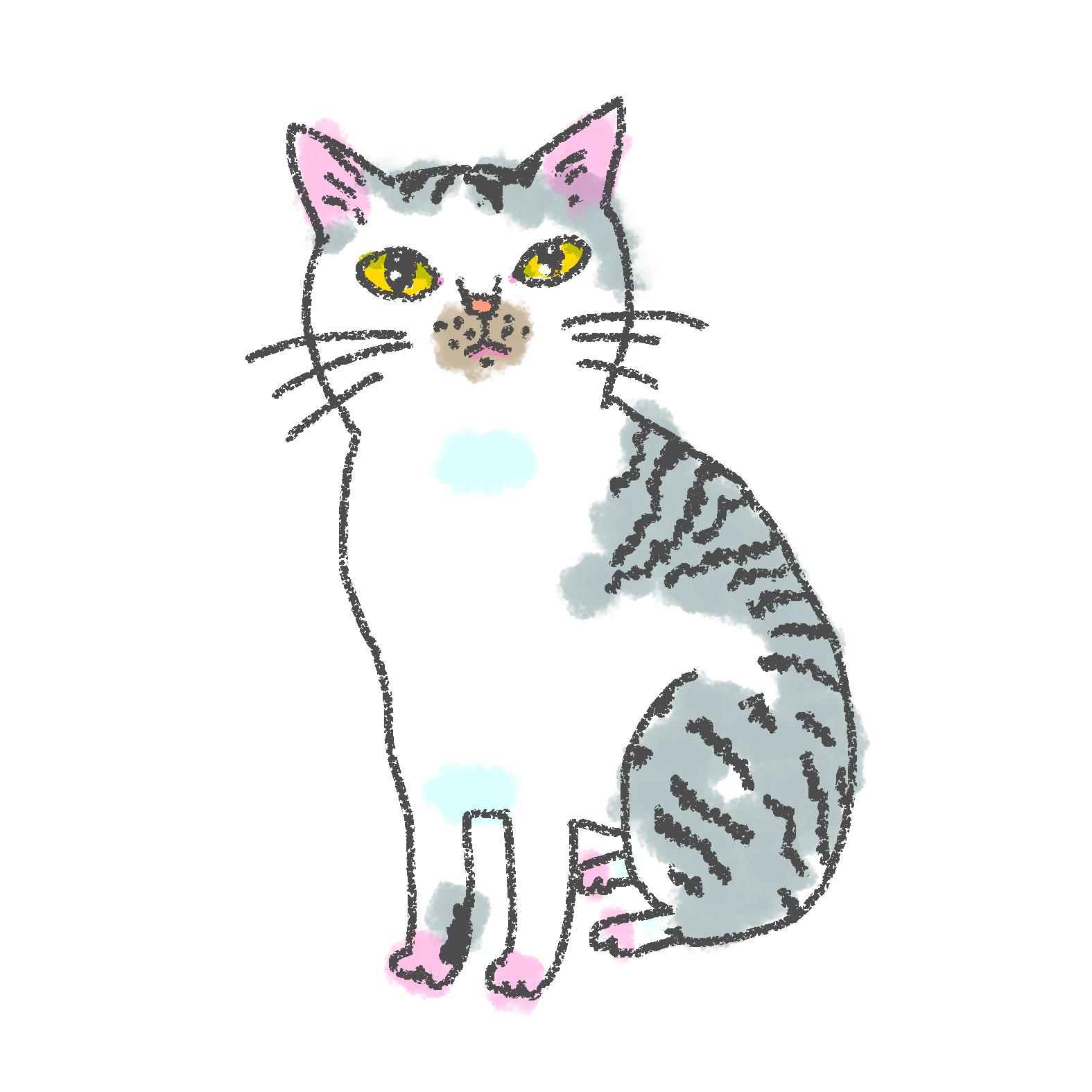 入居猫 サチイメージ