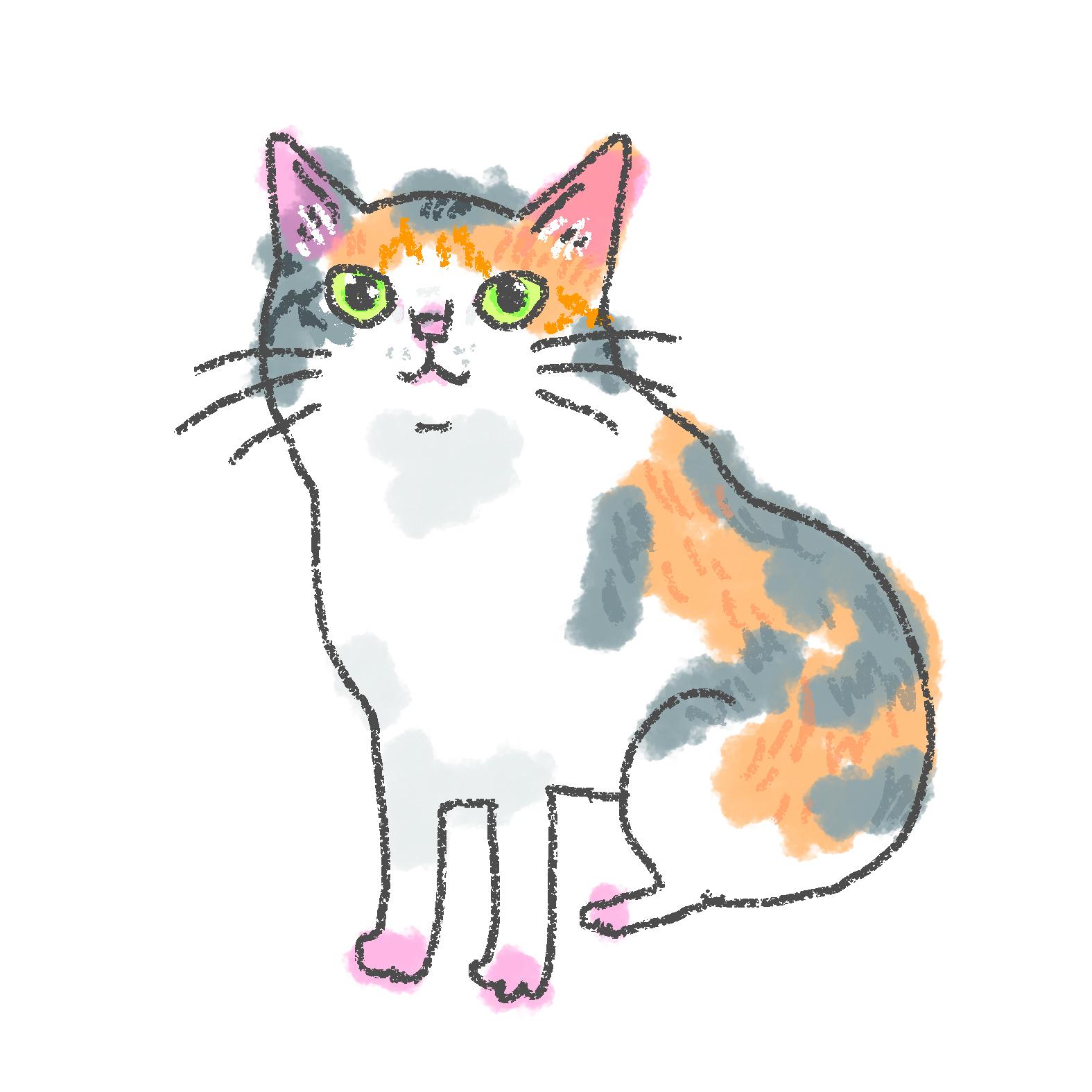 入居猫 ニャコイメージ