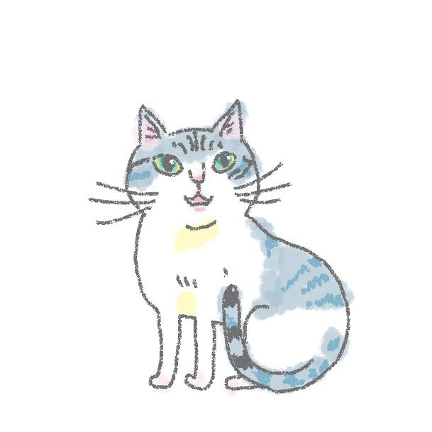 入居猫 フウイメージ