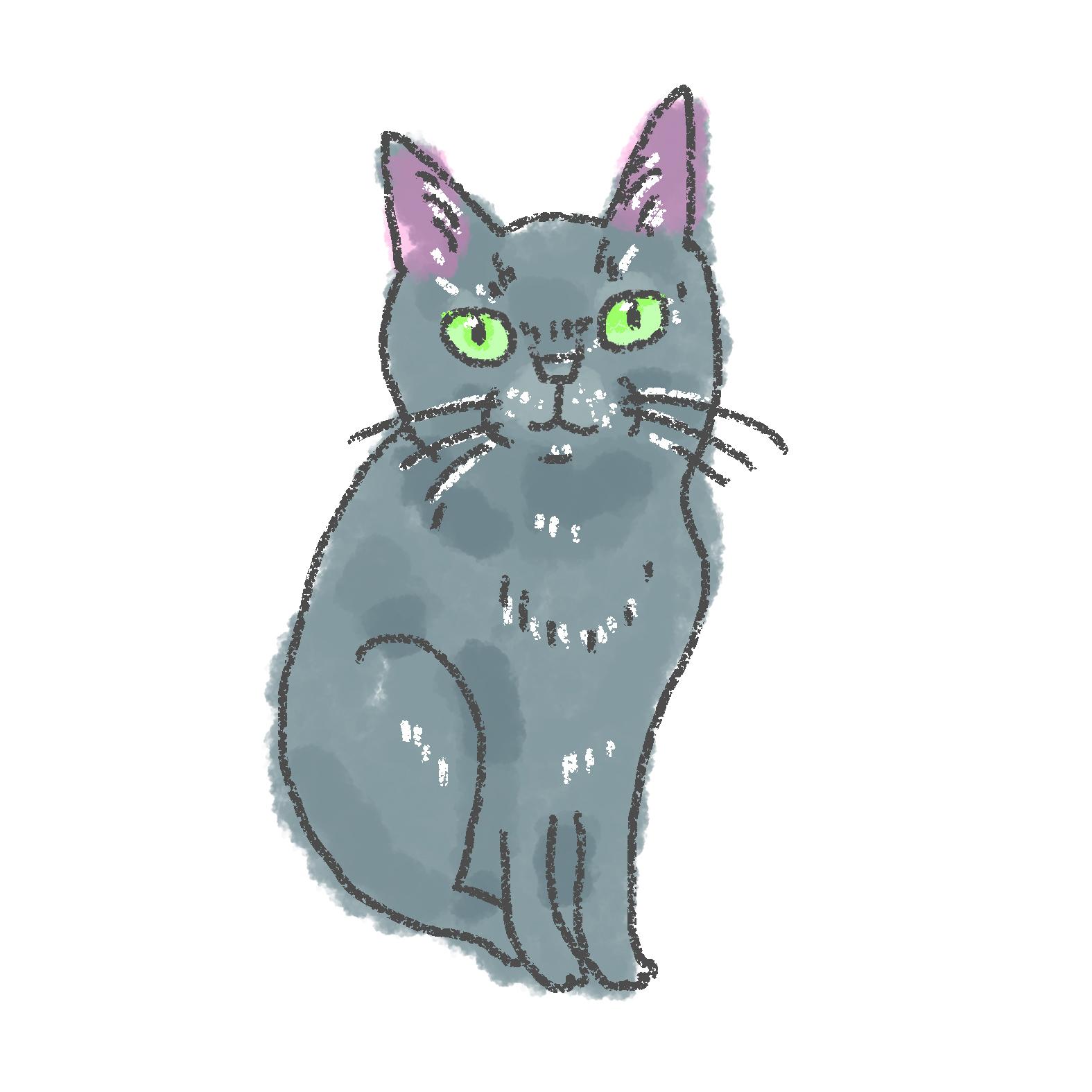 入居猫 マミイメージ