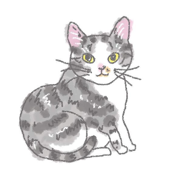入居猫 ムツイメージ