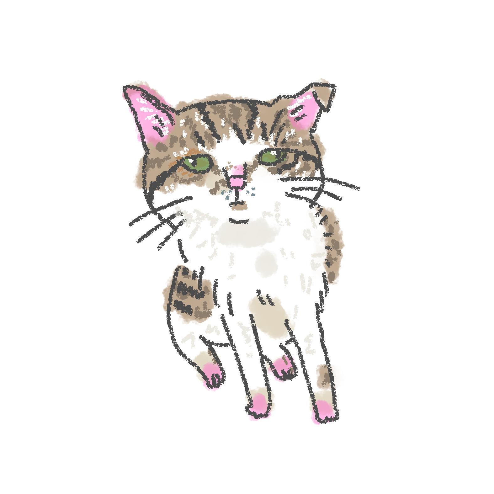 入居猫 ユウタイメージ