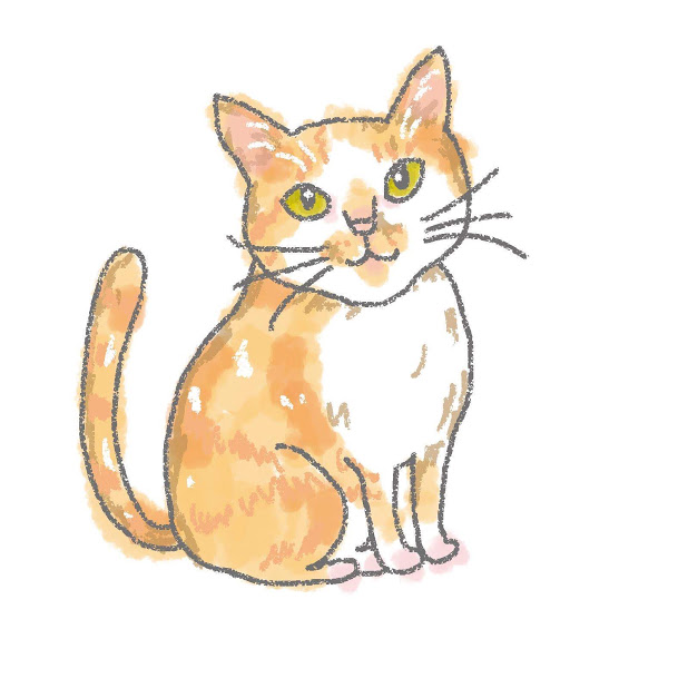 入居猫 ユウヒイメージ