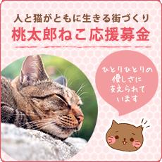 桃太郎ねこTNR活動