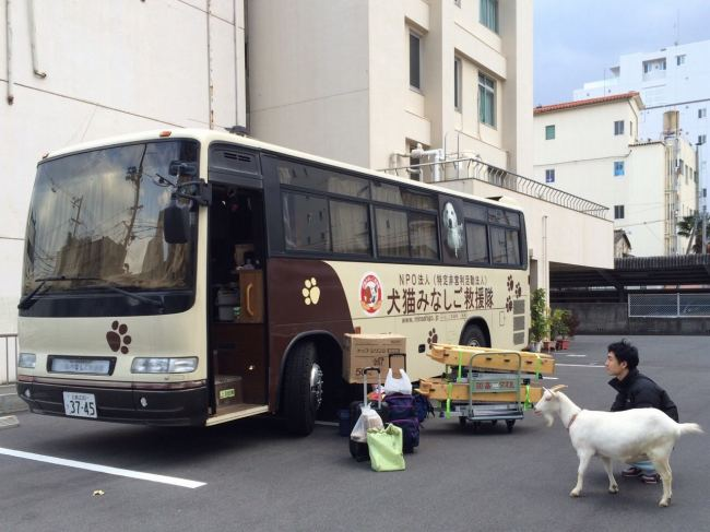 岡山・猫一斉TNR