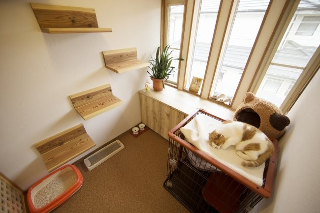 猫専用ホテル