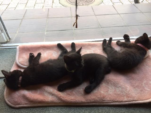 黒子猫4兄弟