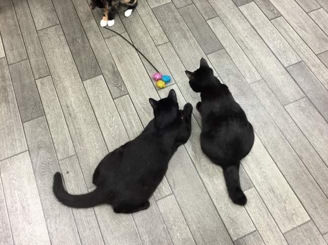黒子猫兄弟