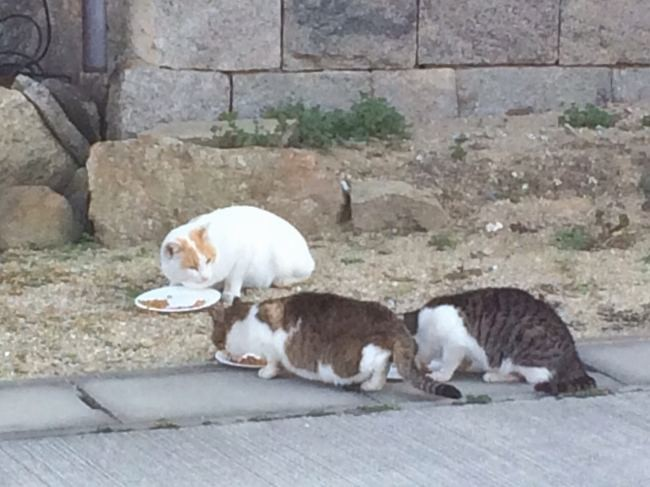 真鍋島の猫たち