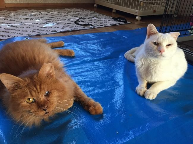 多頭飼養場の猫たち
