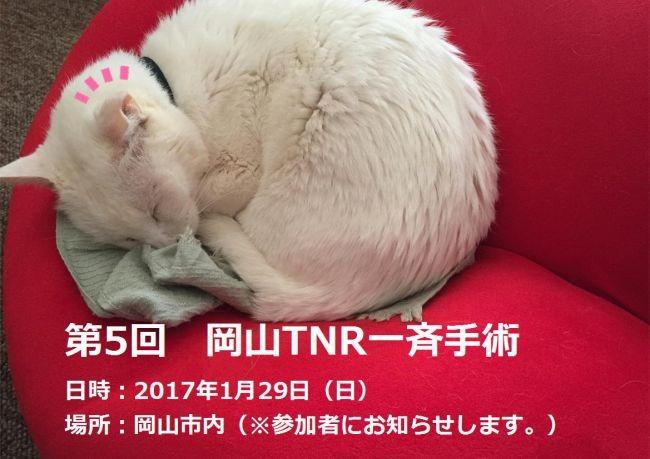 第5回 岡山TNR一斉手術