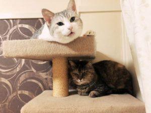 老猫ルーム